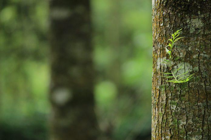 Procedura wycinki drzew na działce